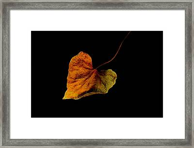 Framed Print featuring the photograph Flying Leaf by Marwan Khoury