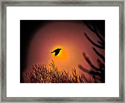 Flying - Leif Sohlman Framed Print