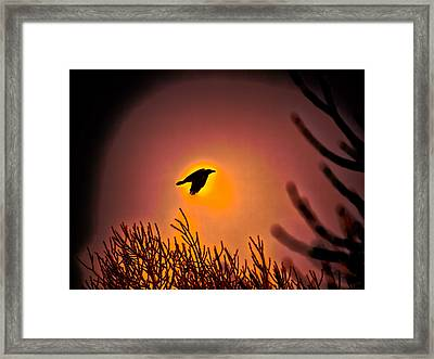 Flying - Leif Sohlman Framed Print by Leif Sohlman