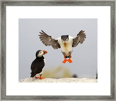 Flying Lessons Framed Print by PMG Images