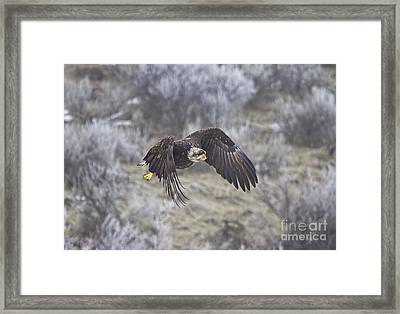 Flying Low Framed Print by Mike  Dawson