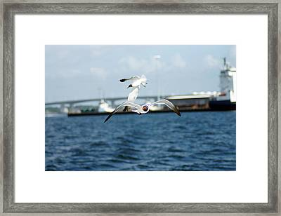 Flying Low Framed Print by Thomas Fouch