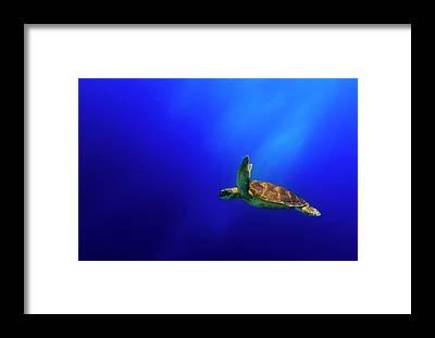 Free Dive Framed Prints