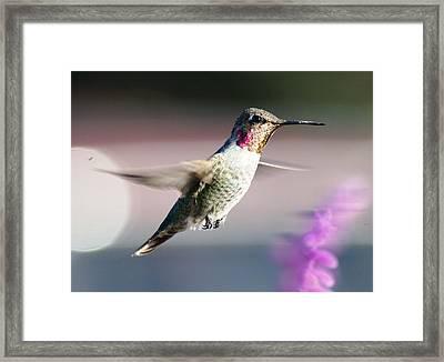 Flying Framed Print by Meeli Sonn