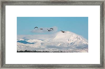 Flying North Framed Print by Jan Davies