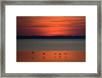 Flying North Framed Print