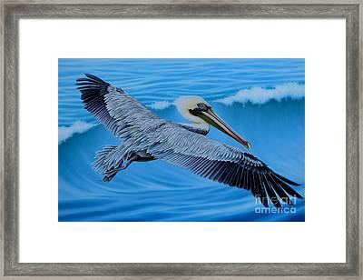 Flying Pelican Framed Print