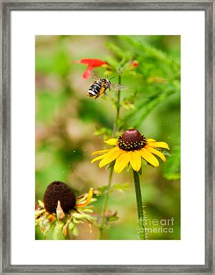 Flying Pollen Framed Print