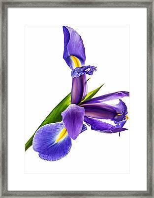 Flying Purple People Pleaser Framed Print by Steve Harrington