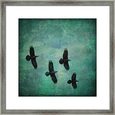 Framed Print featuring the photograph Flying Ravens by Peggy Collins