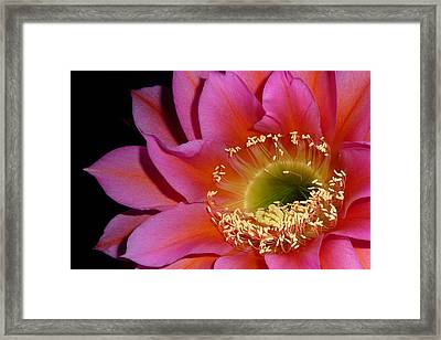 Framed Print featuring the photograph Flying Saucer Cactus by Cindy McDaniel