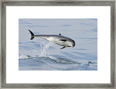 Flying Sideways Framed Print
