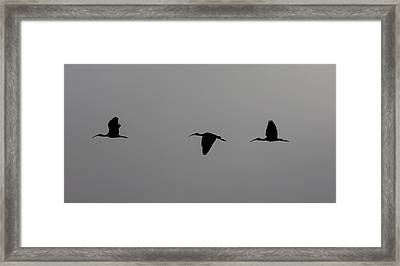 Framed Print featuring the photograph Flying Silhouettes by John M Bailey