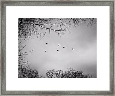 Flying South Framed Print by Richie Stewart