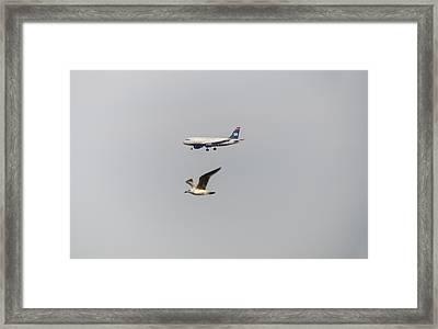 Flying Together Framed Print
