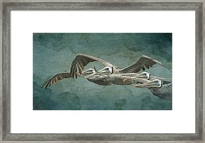 Flying With The Pelicans Framed Print