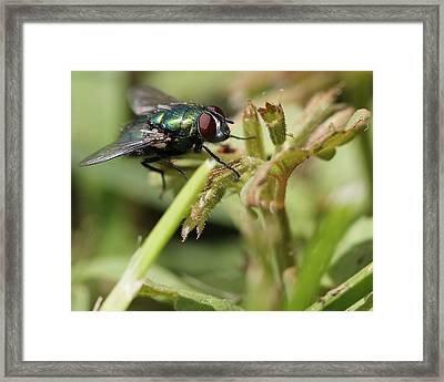 Fly's Eye's Framed Print