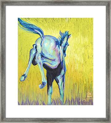 Foal At Play Framed Print by Sally Buffington