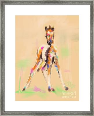 Foal Cute Fellow Framed Print by Go Van Kampen