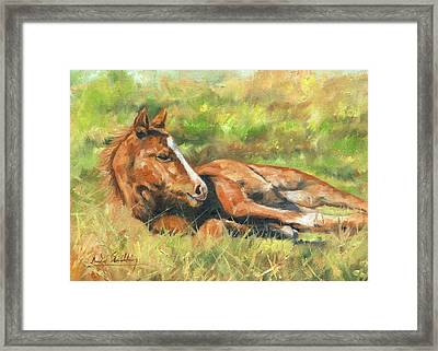 Foal Framed Print by David Stribbling