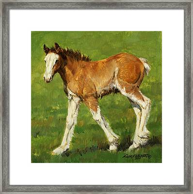 Clydesdale Foal Framed Print by Don  Langeneckert