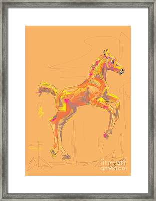 Foal Out And About Framed Print