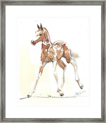 Foal Pinto Framed Print by Go Van Kampen