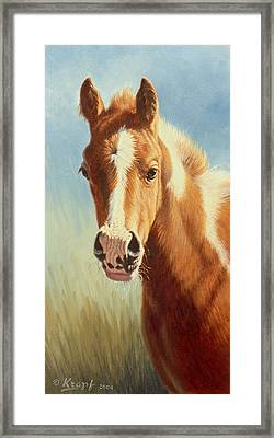 Foal Portrait Framed Print by Paul Krapf