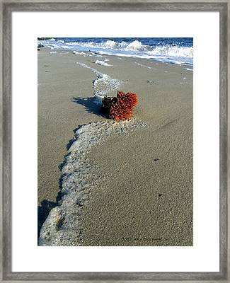 Foam And Seaweed On The Beach Framed Print
