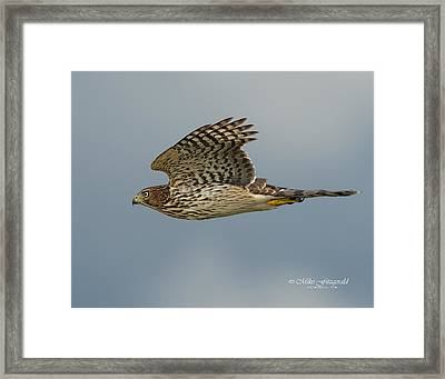 Focus Attention Framed Print
