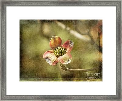 Focus On Dogwood Framed Print by Terry Rowe