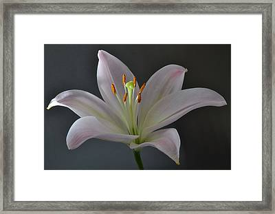 Focus On Lily. Framed Print