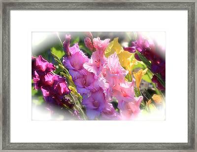 Focus On Summer Sunshine Framed Print by Carol Groenen