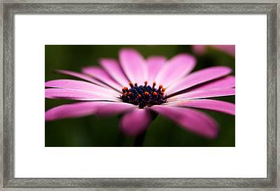 Focus On The Middle Framed Print by Kim Lagerhem
