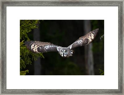 Focus On The Target Framed Print by Torbjorn Swenelius