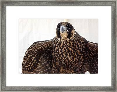 Framed Print featuring the photograph Focus by Richard Faulkner