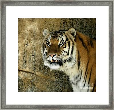 Focused  Framed Print by Christy Ricafrente