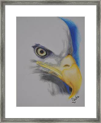 Focused Eagle Framed Print