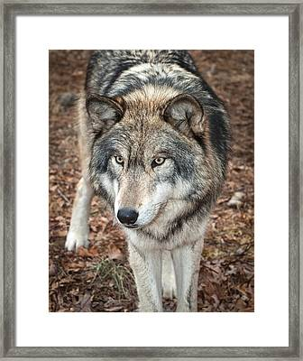 Framed Print featuring the photograph Focused by Gary Slawsky