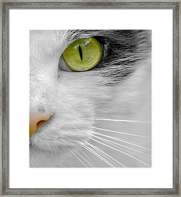 Focused On You Framed Print by Adrian Campfield