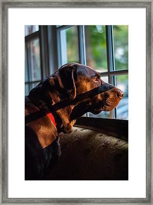 Focused Framed Print by Sammy Snider