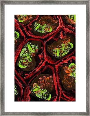 Foetus Framed Print by Lauren Caldwell