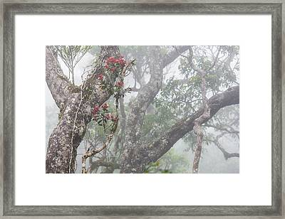 Fog And Flowers Framed Print by Tony Murray