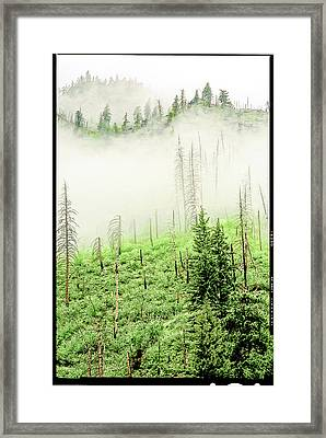 Framed Print featuring the photograph Fog And Trees by Craig Perry-Ollila