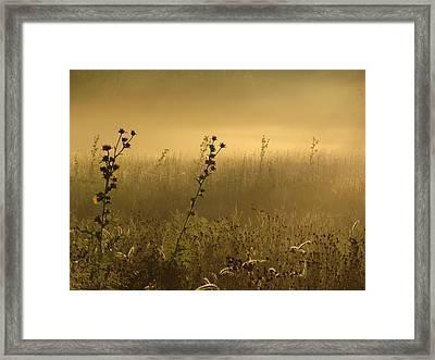 Fog At Dawn Framed Print by Tim Good
