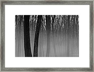 Fog In The Dark Forest Framed Print by Diana Boyd