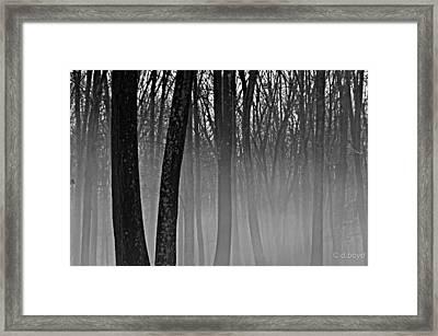 Fog In The Dark Forest Framed Print