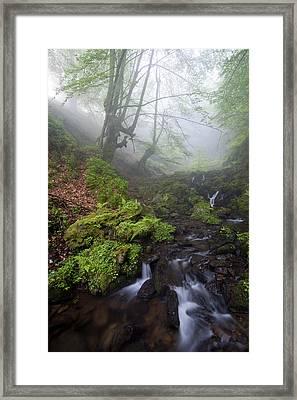Fog In The Forest Framed Print by Marilar Irastorza