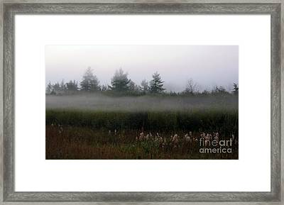 Fog Line Above Woodland Framed Print by Andre Paquin