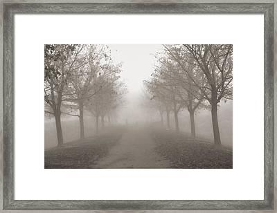 Fog Monochrome Framed Print